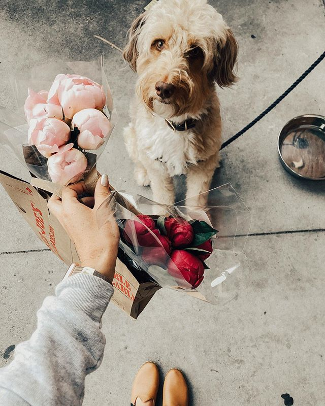 When your pup buys you flowers.  Isn't she the sweetest? 😍 #PixelPup