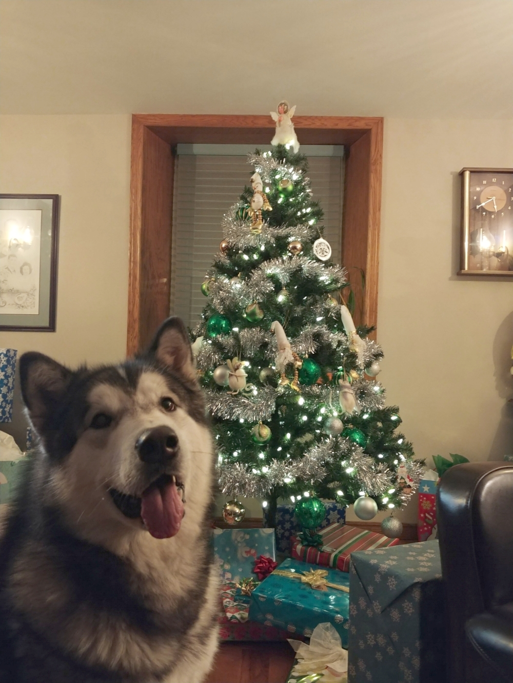 Meeko is excited for the holidays!