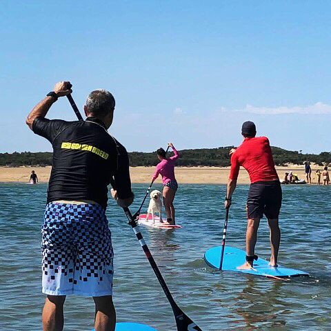 Shoutout to Jess and Ray, who aced their first paddleboard lesson today! We had a heap of fun out on the water, and now these two are ready to paddle anywhere!  We'd also like to congratulate Yogi on becoming our first canine student! He was a very good bouy! . . . . . . . . . . . . . . #inverlochsup #inverloch #gippslandtourism #victoriatourism #tourismvictoria #tourismaustralia #sup #standuppaddle #standuppaddleboard #surf #surfing #dogsofinstagram #doggo #paddlepup