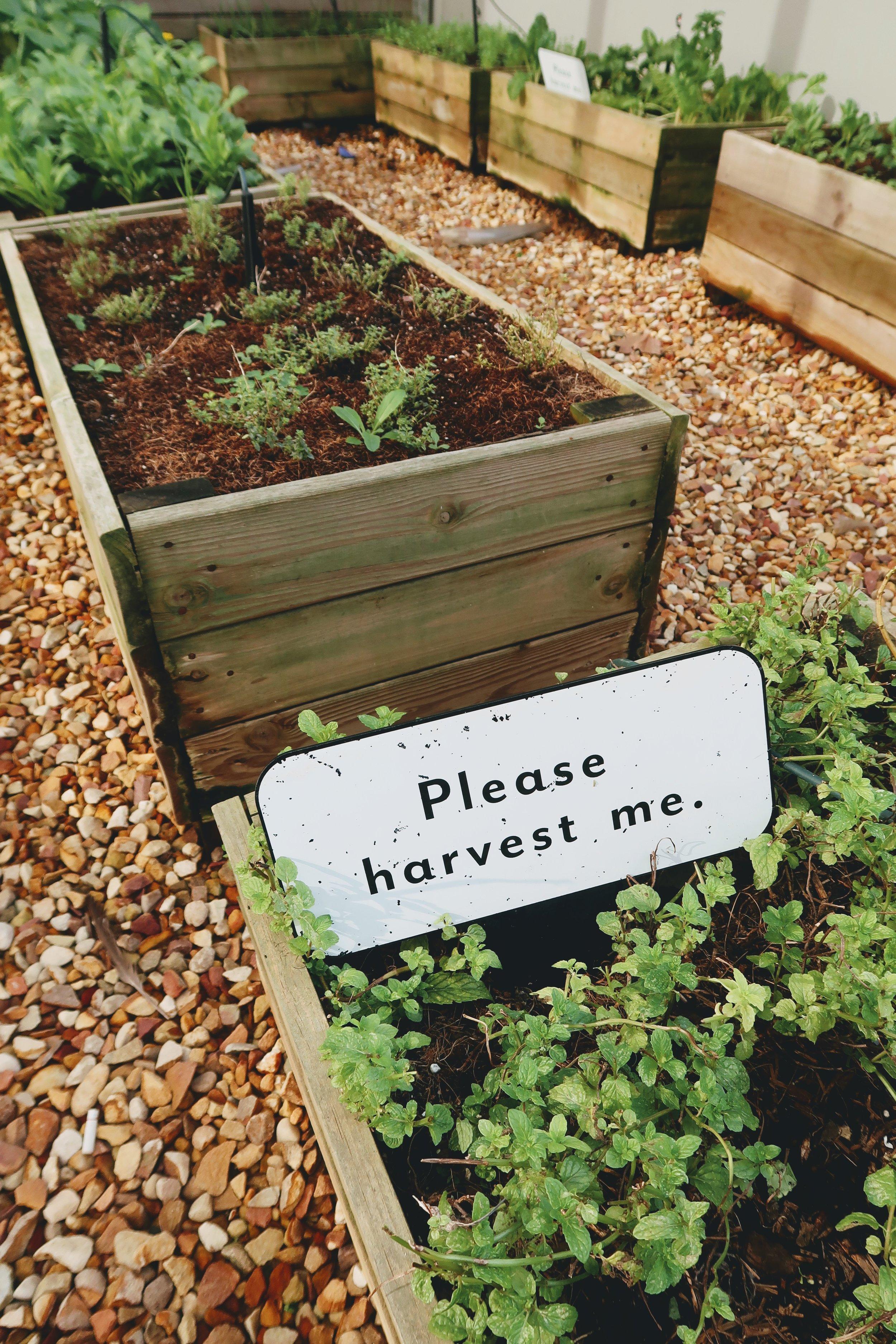 doubletree-hilton-cape-town-fresh-herb-garden