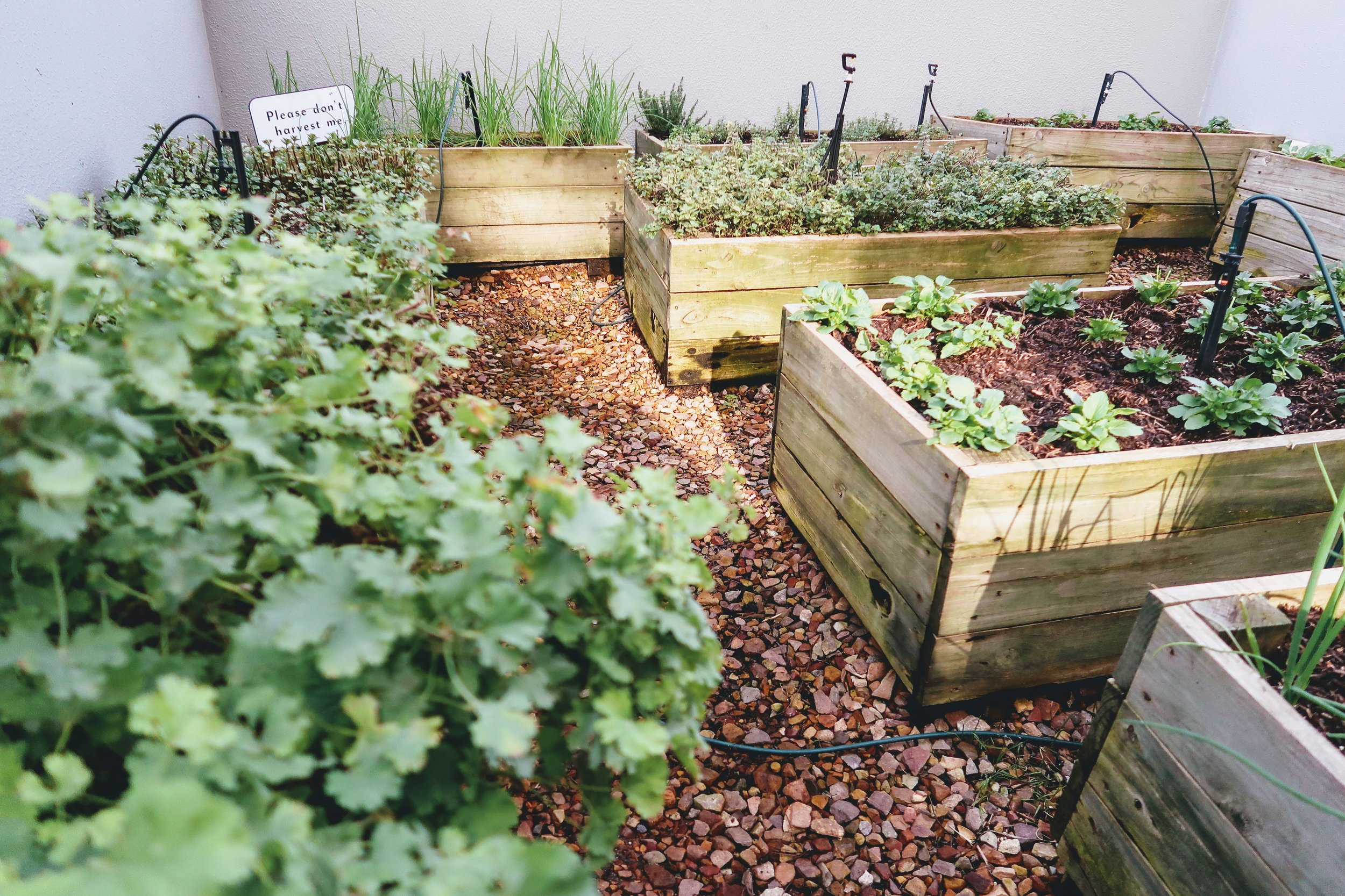 DoubleTree by Hilton Cape Town's very own outdoor herb garden.