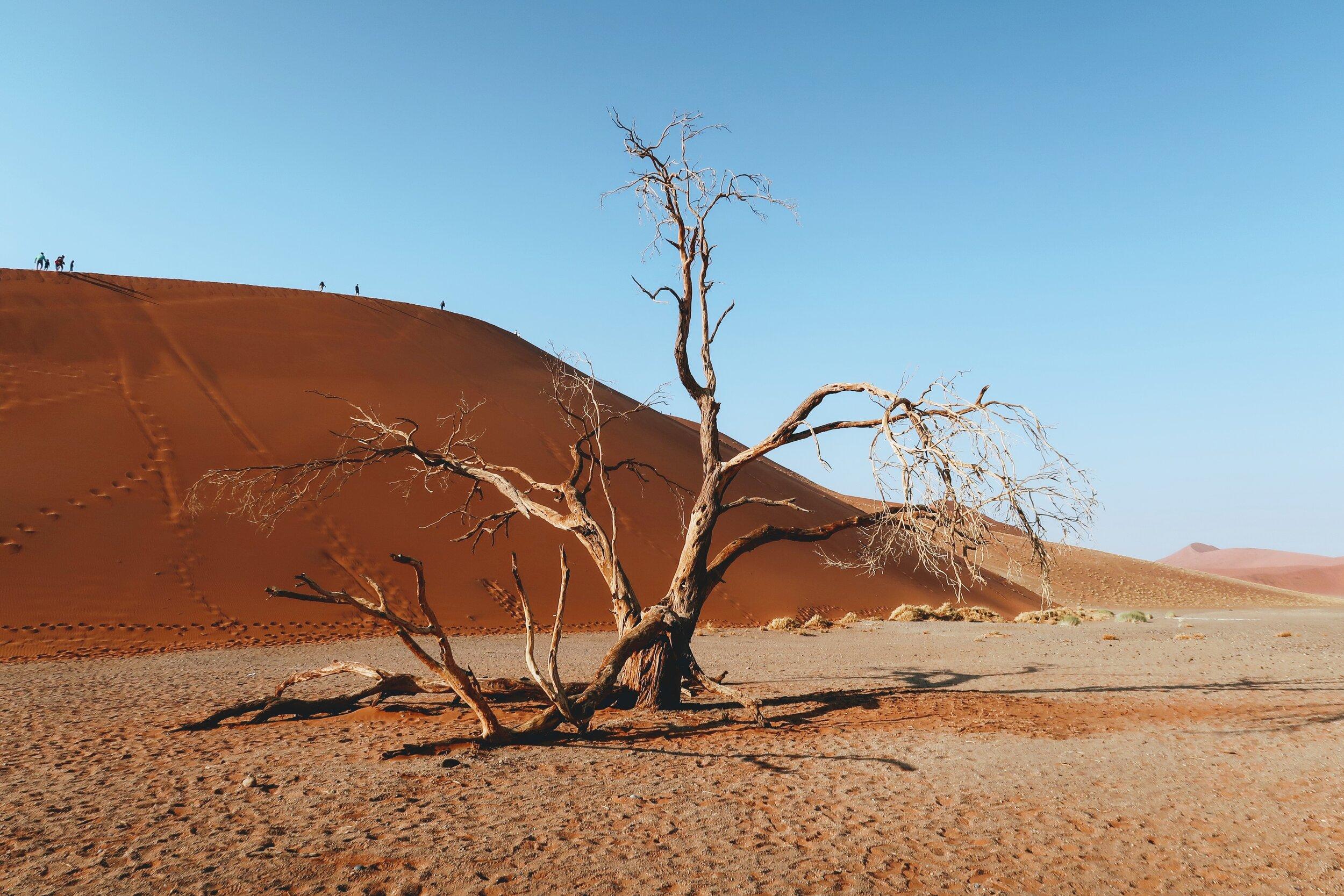 dead-trees-dune45-sossusvlei-namibia