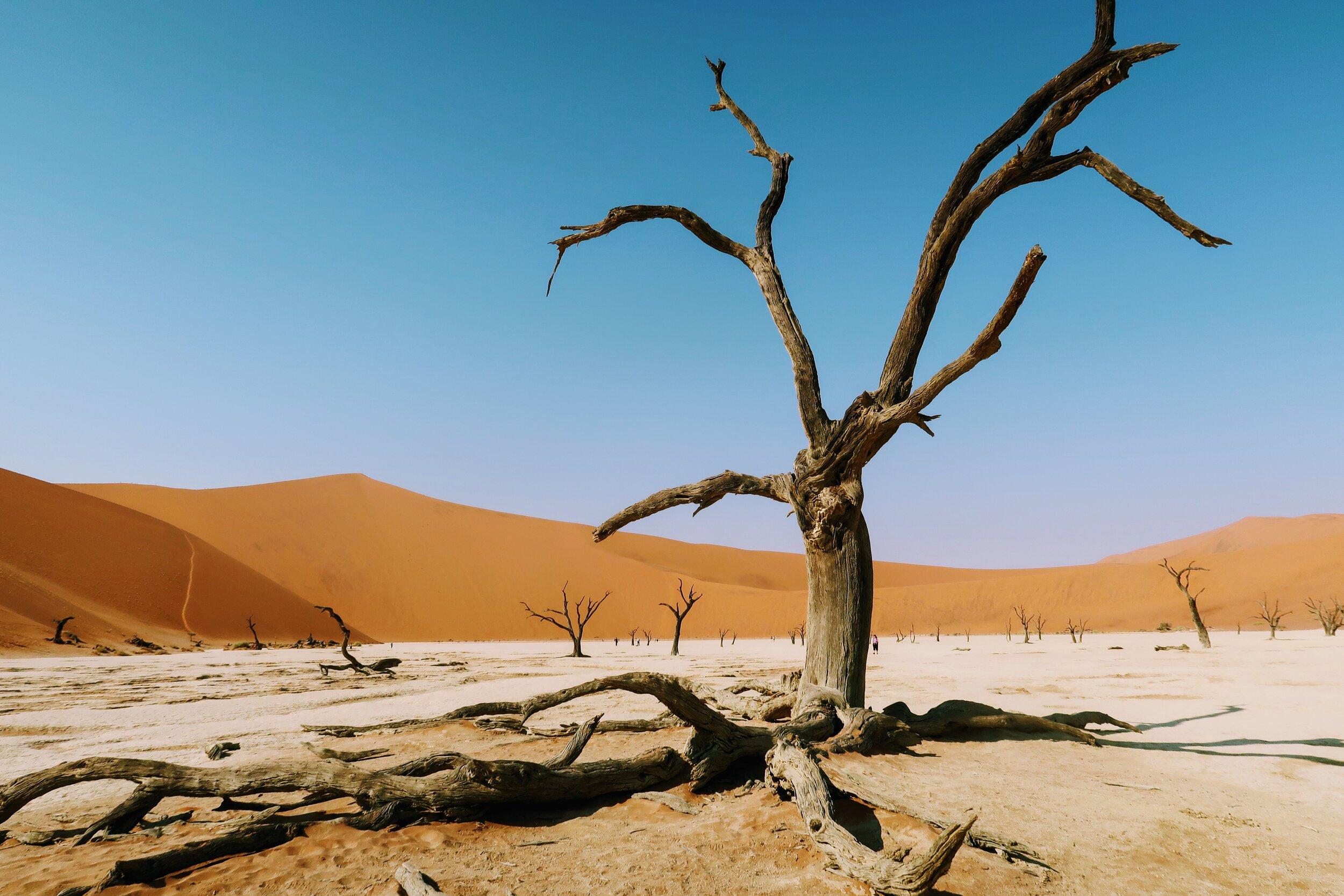 deadvlei-dead-trees-namibia