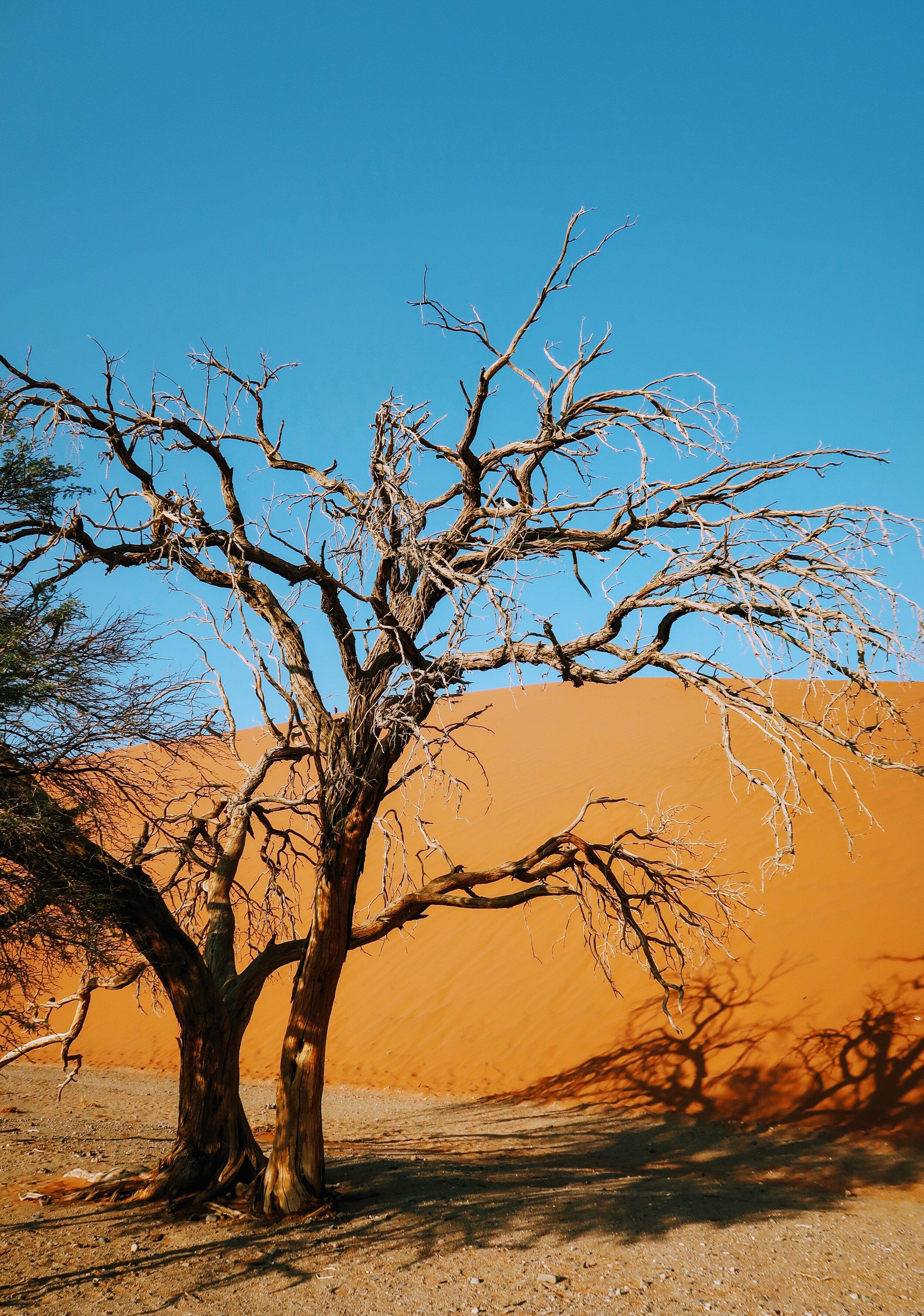 must-visit-namibia
