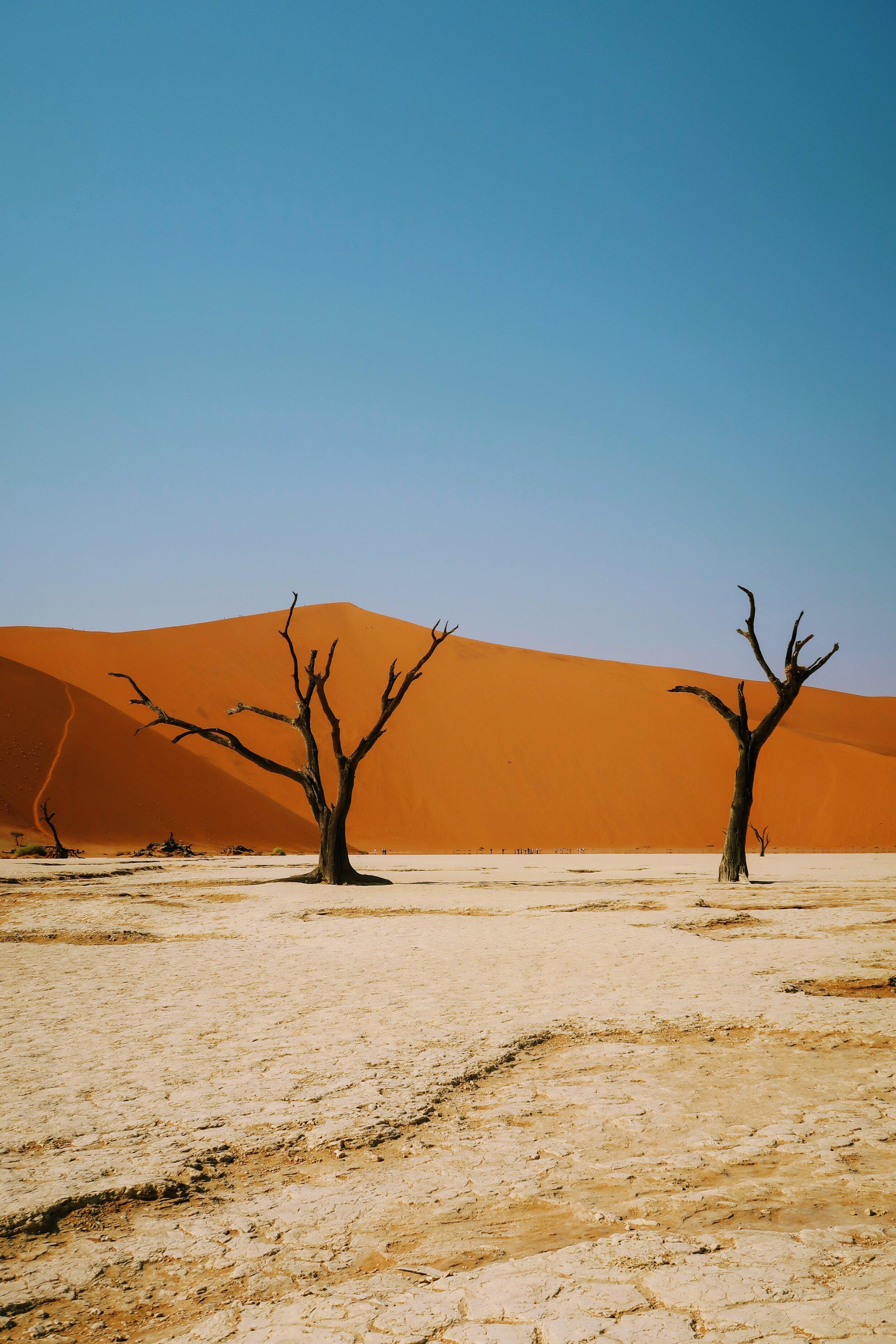 unique-destination-namibia