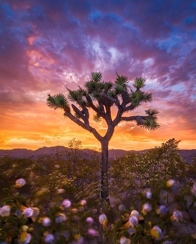 A few spots left for our Joshua Tree Weekend Reset! 🌵 October 26th - 28th 2018. . • Explore hidden slot canyons • Practice yoga to live music • Play under out-of-this-world sunsets • Be nourished by privately-catered vegetarian meals • Hang out on a colorful artists estate • Sleep under a skyful of stars • Soak in hot tubs with wine • Unplug - and reconnect with yourself, nature and friends who become family . Sound amazing? ✨ We think so too - DM to jump in. #mundoadventures . 📸: @danielbraggphotos