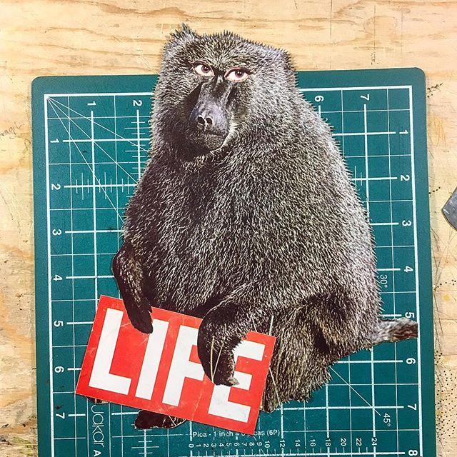"""That's life"" #baboon #life #monkey #audreyseyes #tshirt #design #tshirtdesign #newstuff #pushkinism #artistsoninstagram #collageart #instalike #collage #analogcollage #collageart #cutandpaste #papercollage #collageartist #visualart #contemporarycollage #collagecommunity #handmade #collagewave #c_expo #manualcollage"