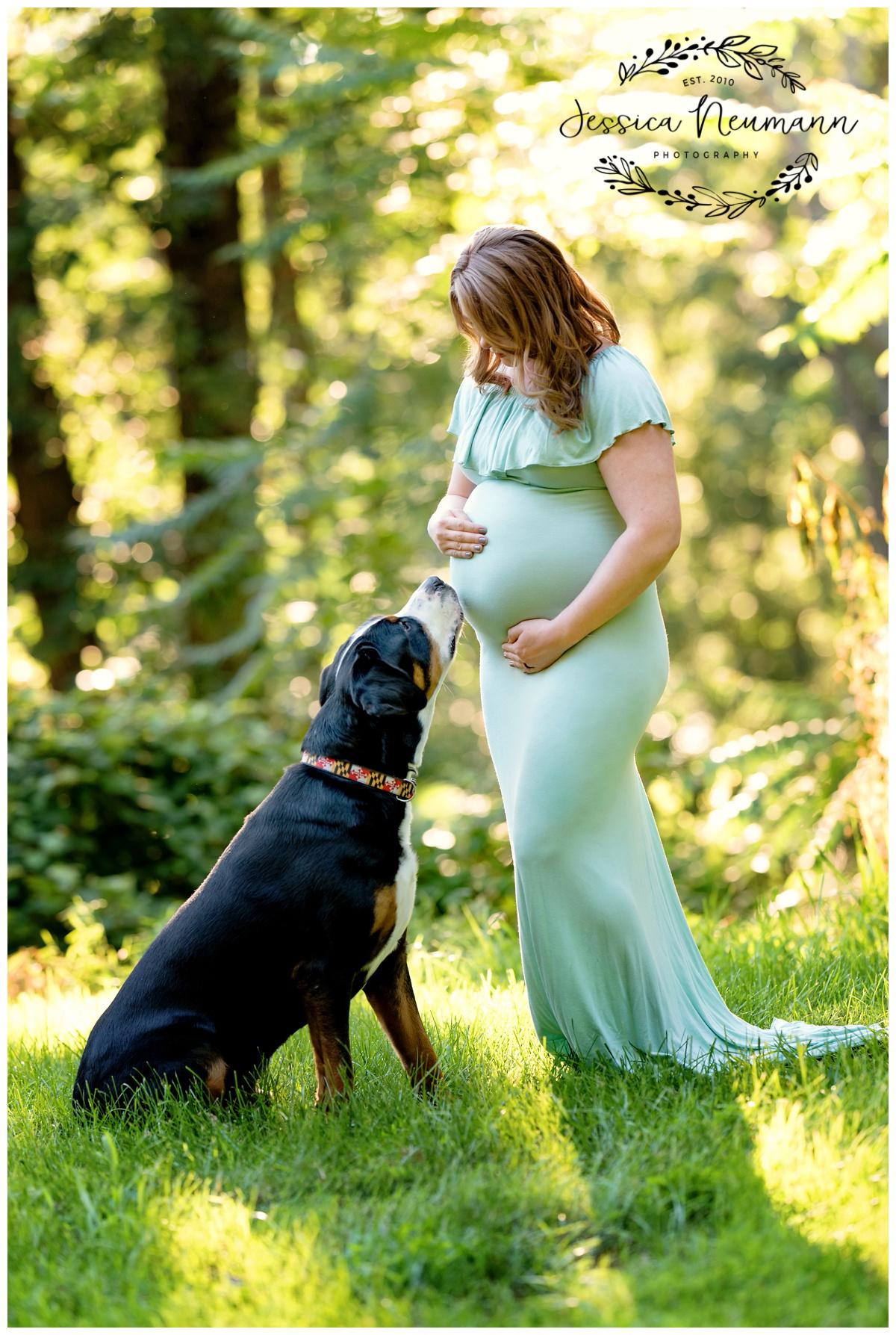 dog in pregnancy photos