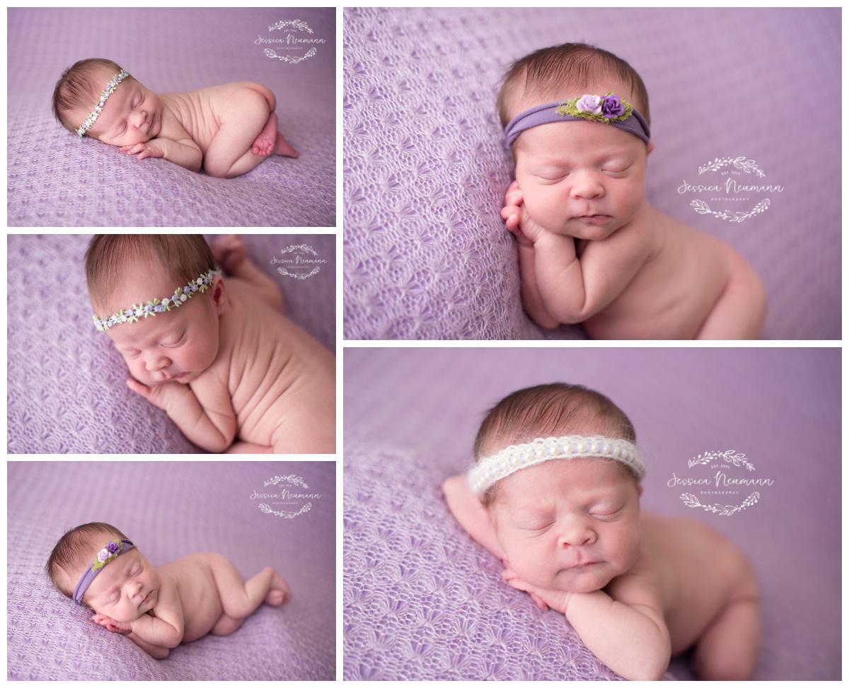 posed newborn on purple