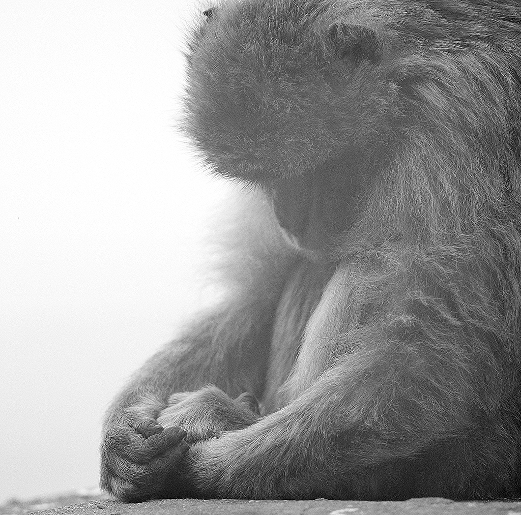 apes4_retro.jpg