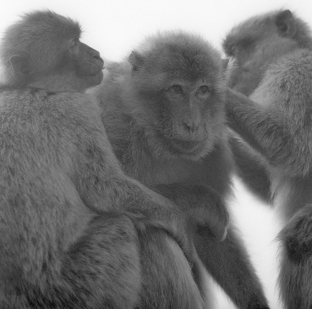 apes12_retro.jpg