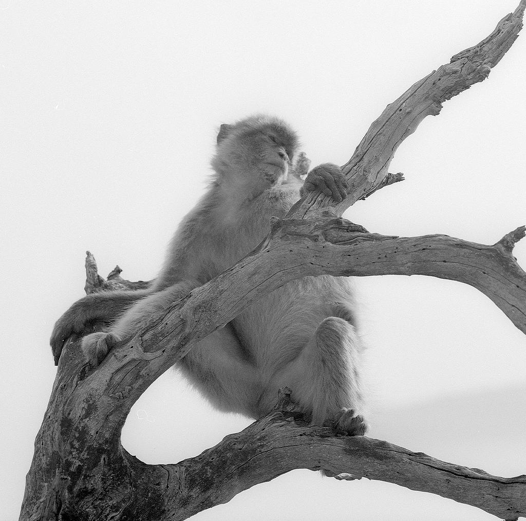 apes20_retro.jpg