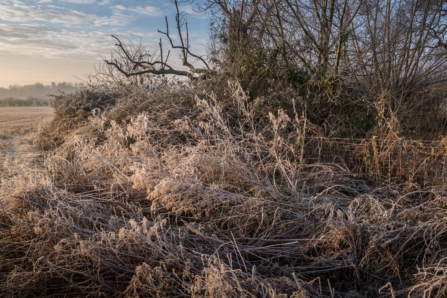 Frosty Morning #chevening #sevenoaks