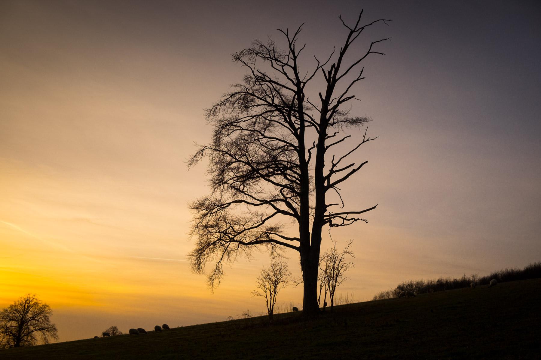 Winter Sunset #chevening #sevenoaks