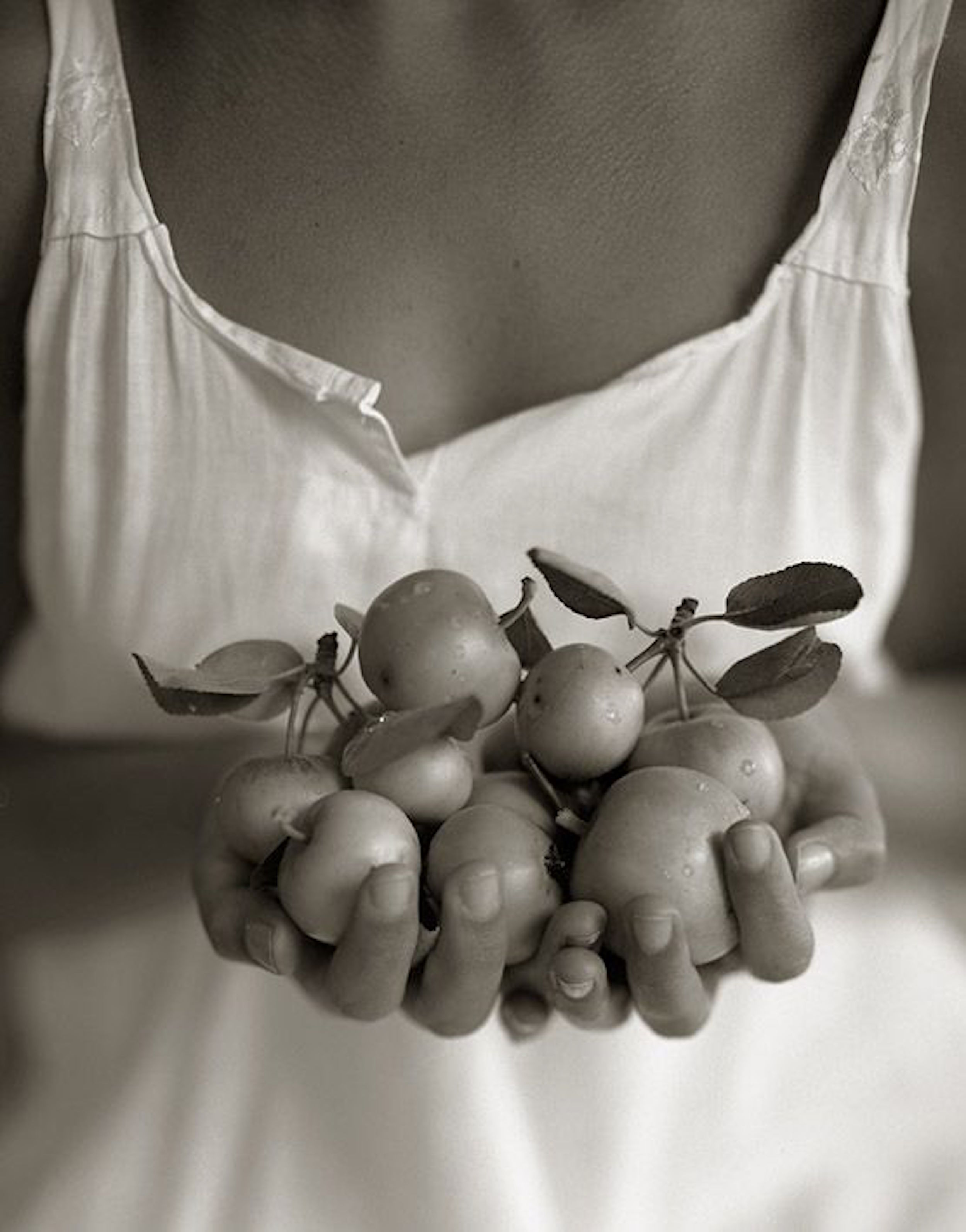 Small apples 1984.jpg