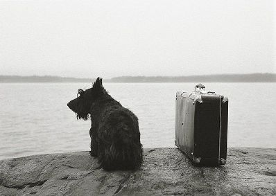 Dog with suitcase 1982.jpg