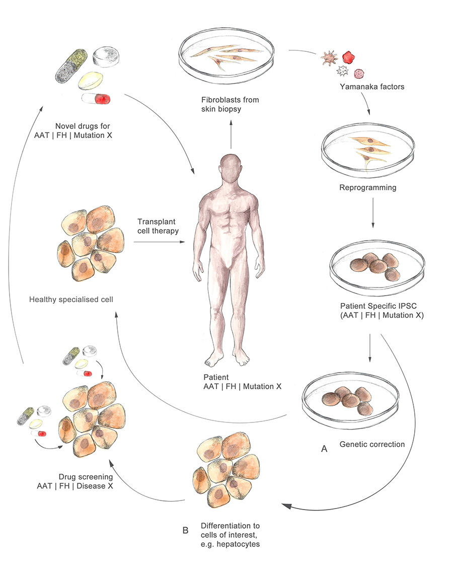 Figure 5: Using the patient's own skin cells, reprogrammed to develop patient-specific medicines, or transplanting fresh tissue to the patient with no rejection