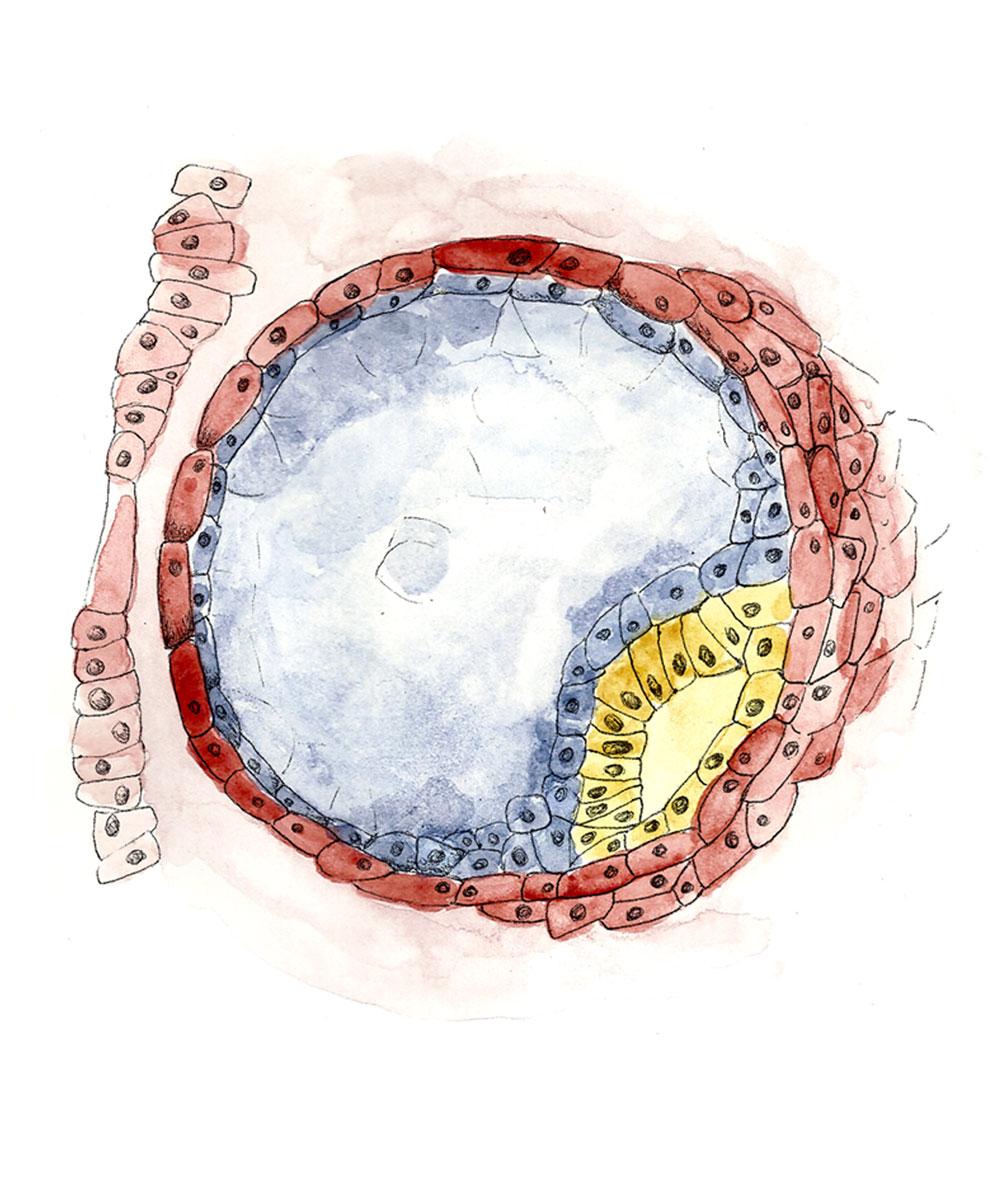 Uterine-Cavity.jpg