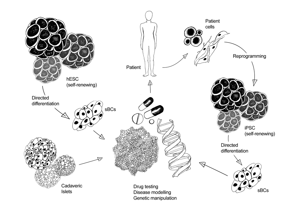 Figure 2: Personalised medicine and gene editing