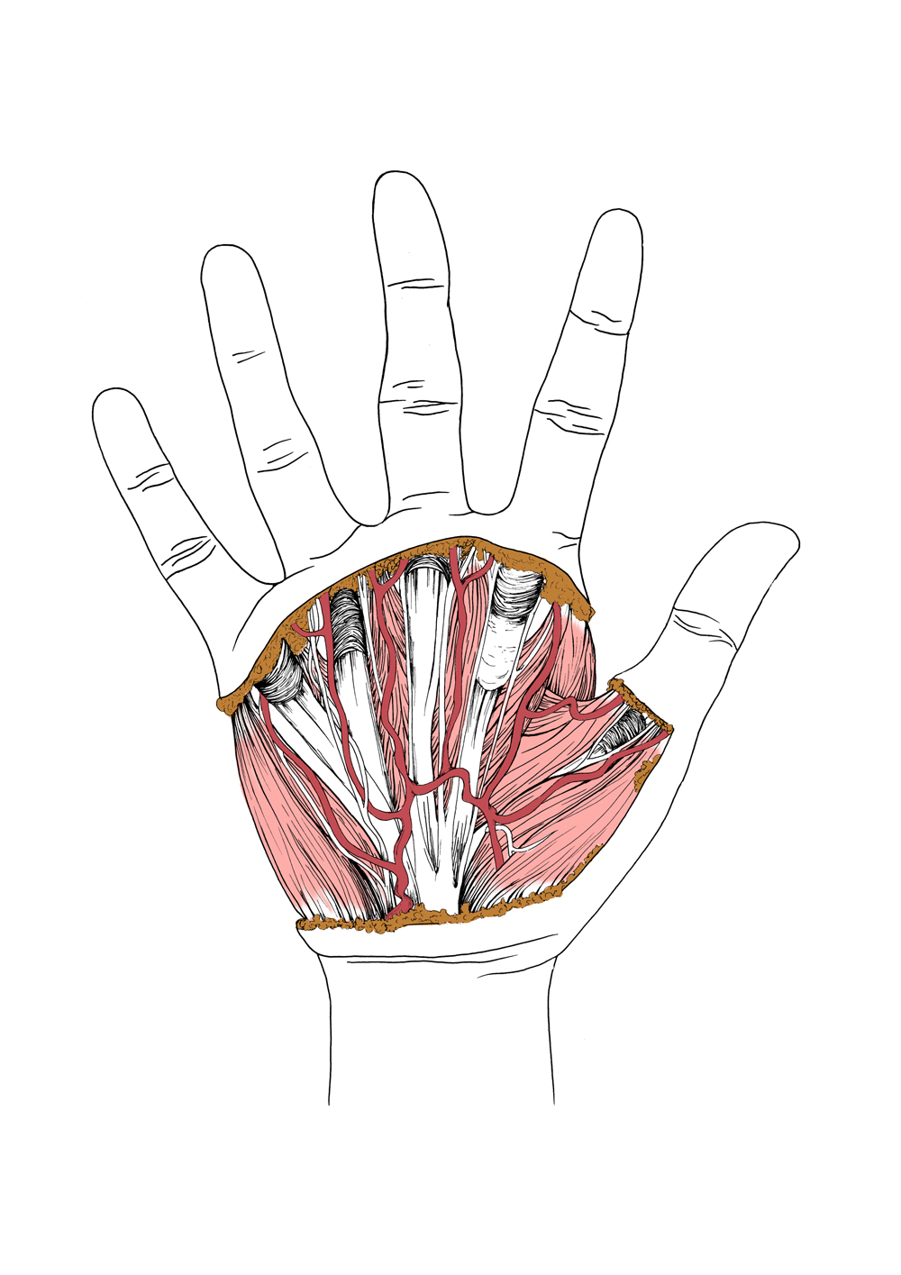 Hand_Dissection_2018.jpg