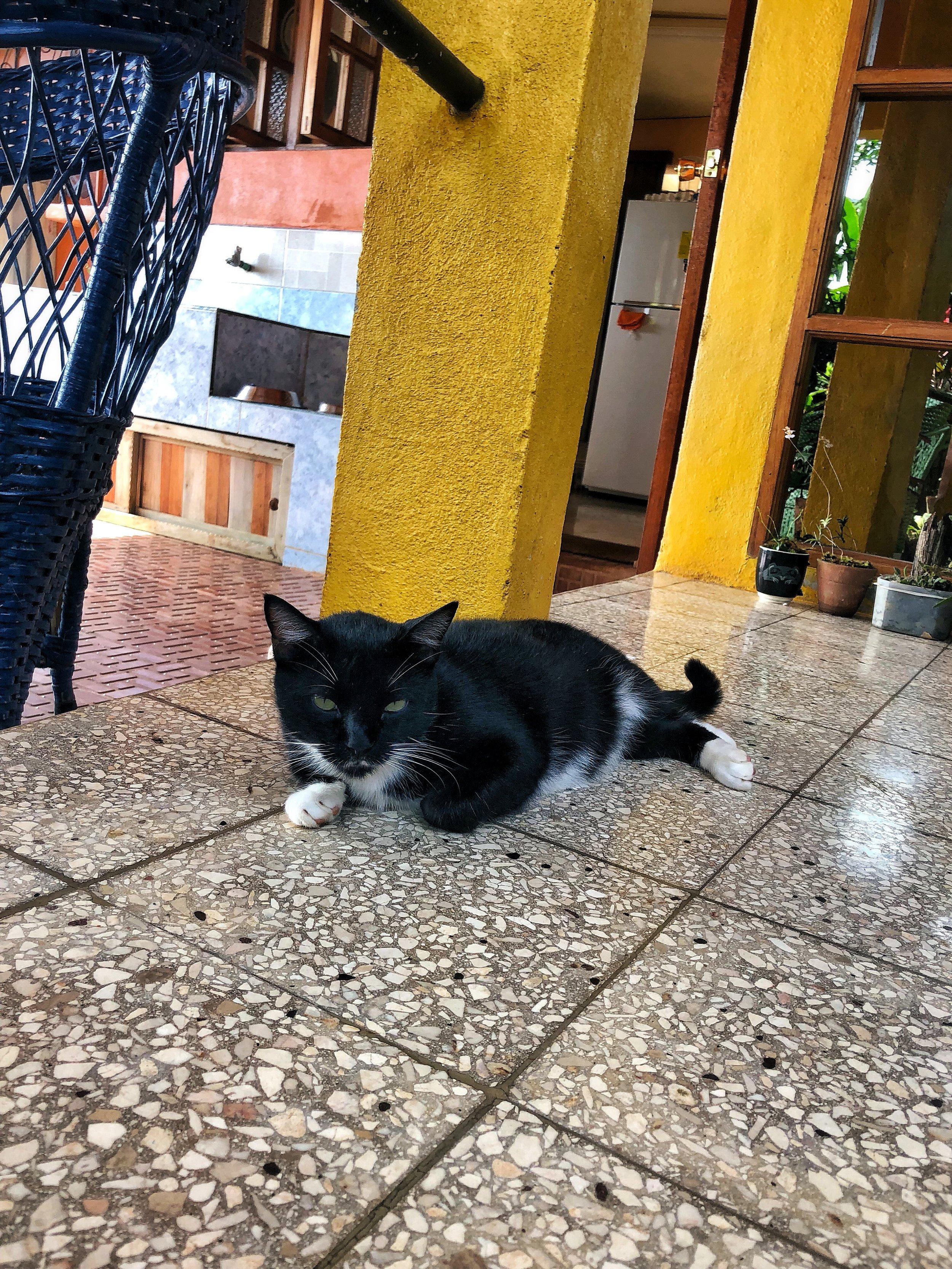 Plino the cat at Villa Paradiso