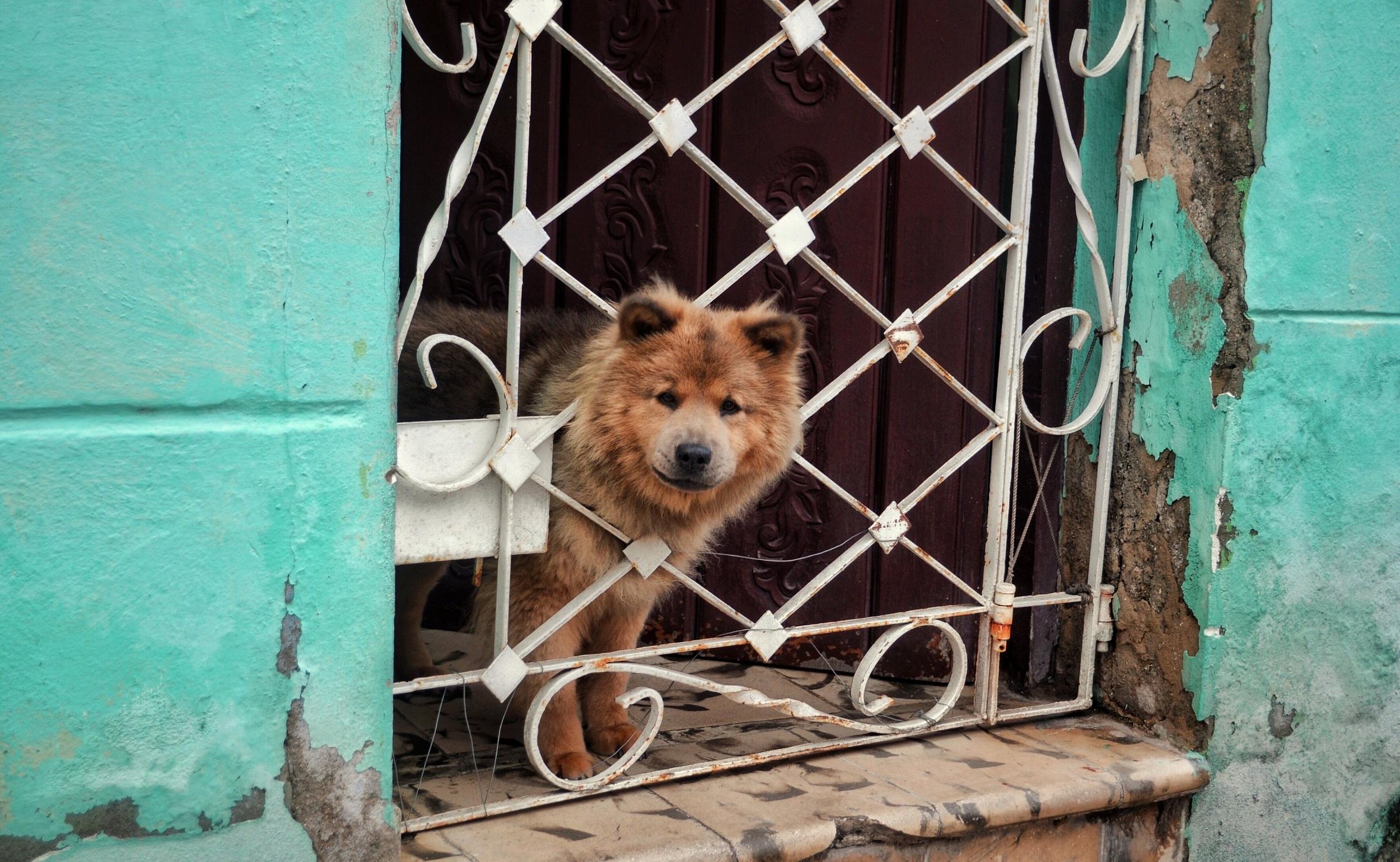 Dog in Camaguey, Cuba