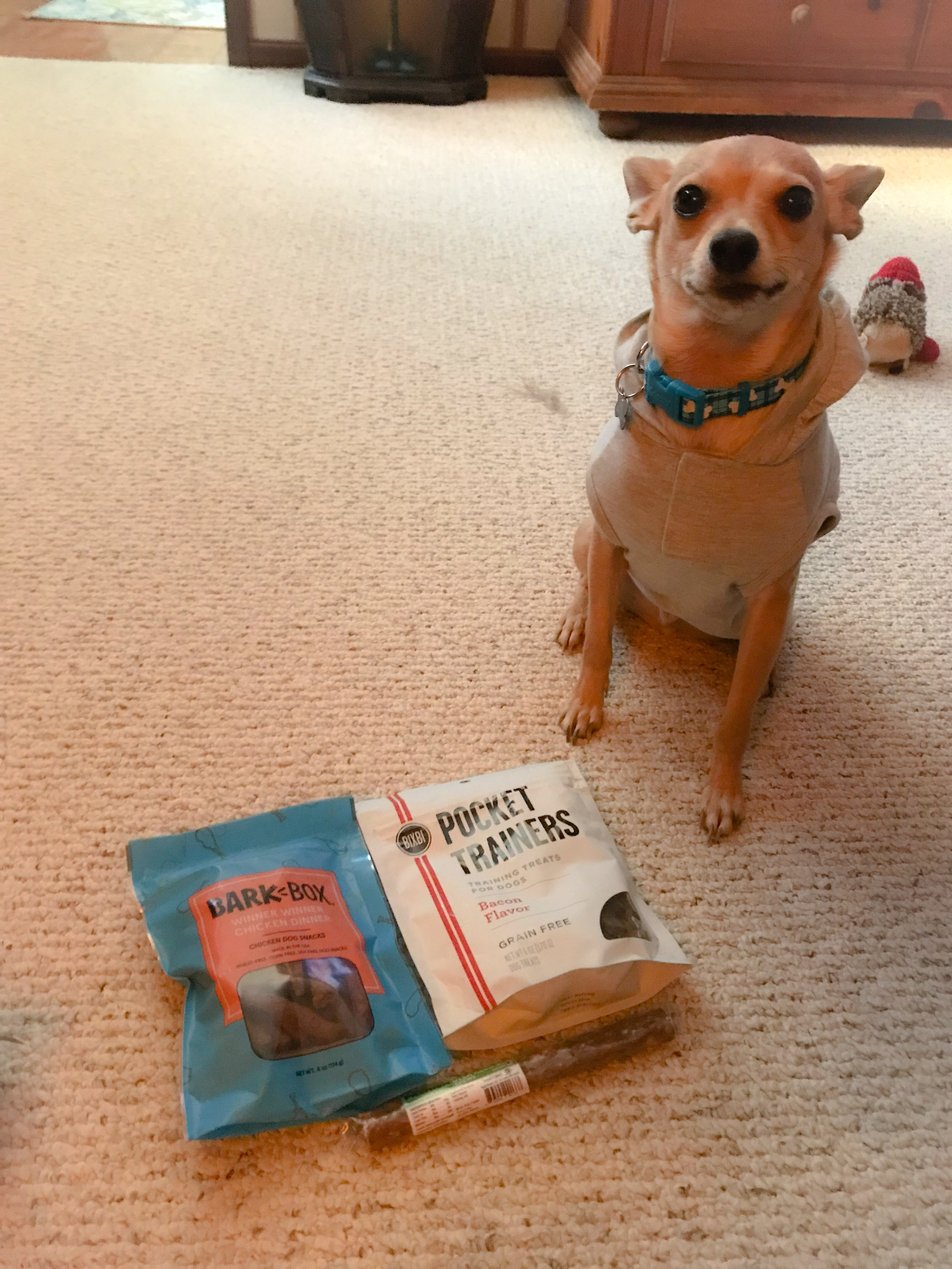 Cooper can't wait to try his treats!