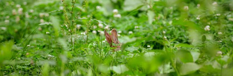 Rabbit C7P_2985.JPG