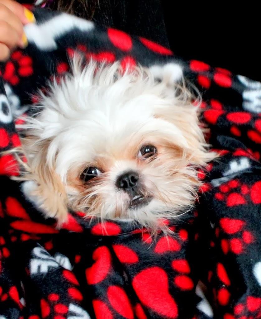 bailey-in-blanket.jpg