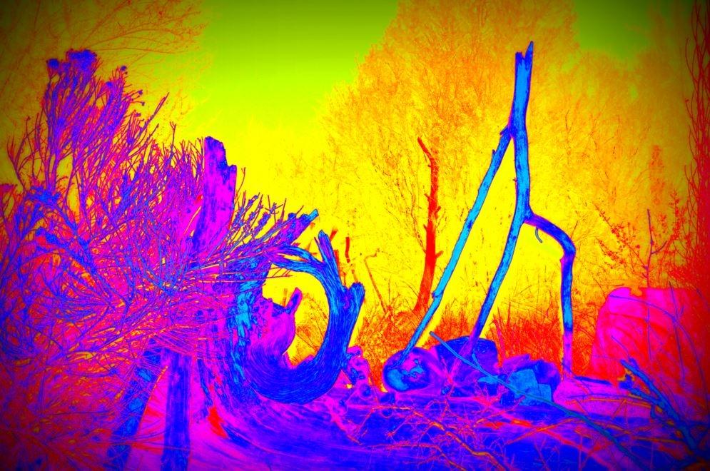 log walking stick picasa enhancd.JPG