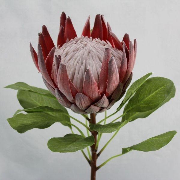 91c95e0e5367f97bc38aa26b15d8b534--protea-flower-silk-flowers.jpg