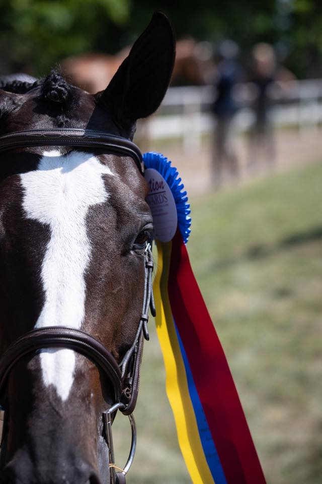 Clear Sailing modeling her championship ribbon, won in the Large Junior 15 & Under Hunters with Hannah Hoch.