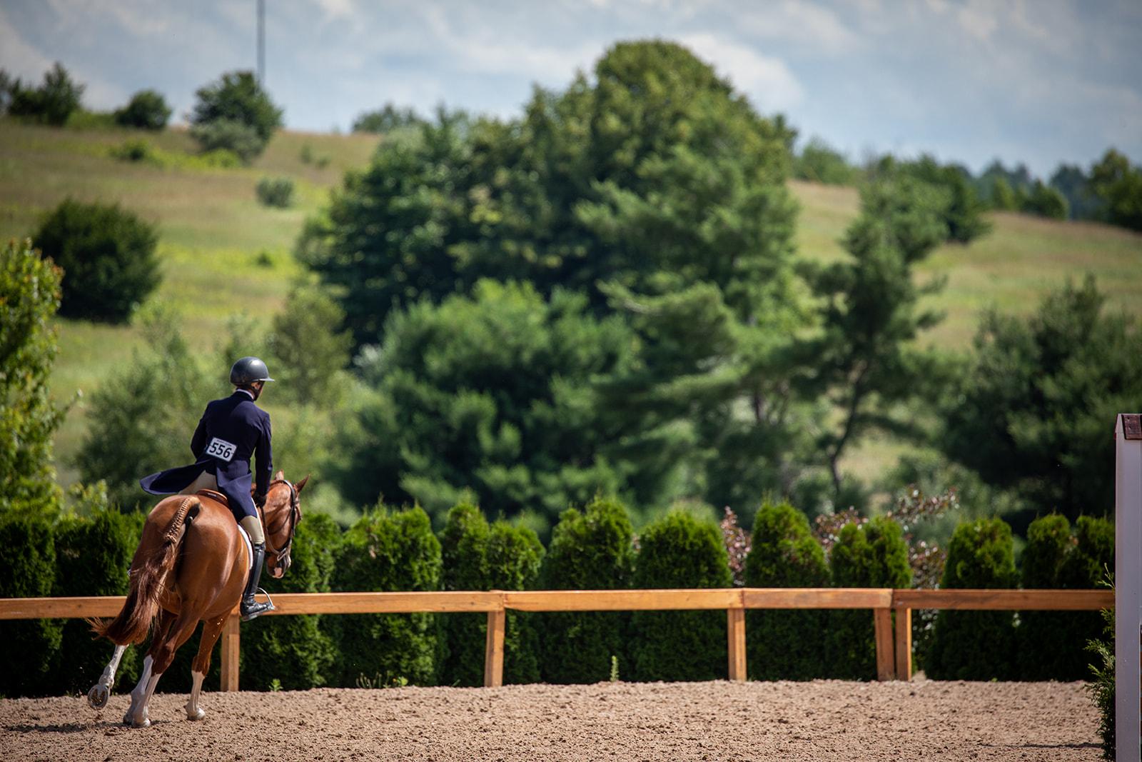 Photos by    Fine Art Horses