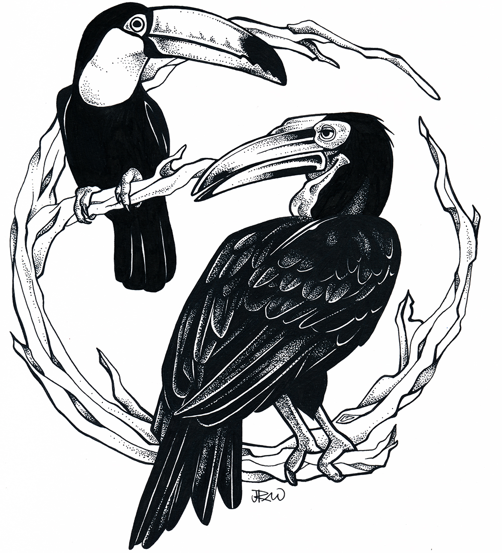 Chiquita the toucan and Kipling the ground hornbill, 2017