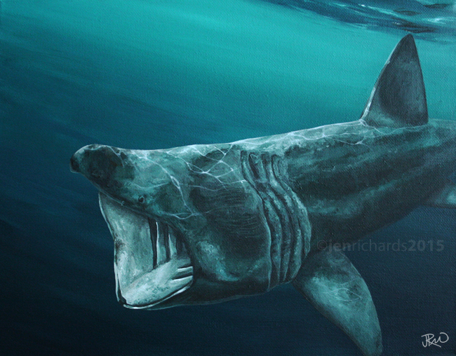 """Basking shark"" - 2015 Acrylic on canvas 14 x 11 inches  AVAILABLE"