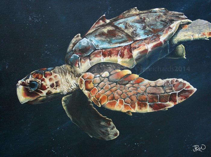 """T.J."" - Juvenile loggerhead sea turtle, 2014 Acrylic on canvas 12 x 9 inches  AVAILABLE"