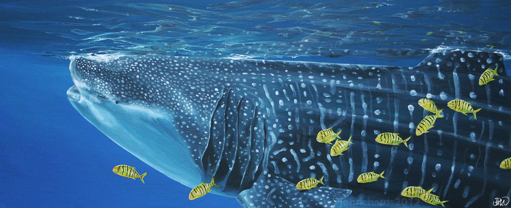 """Entourage"" - Whale shark and juvenile golden trevally, 2012 Acrylic on canvas 30 x 12 inches  AVAILABLE"