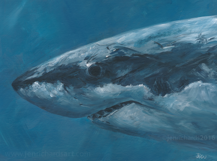 """Great White Portrait"" - White shark, 2016 Acrylic on canvas 16 x 12 inches  AVAILABLE"