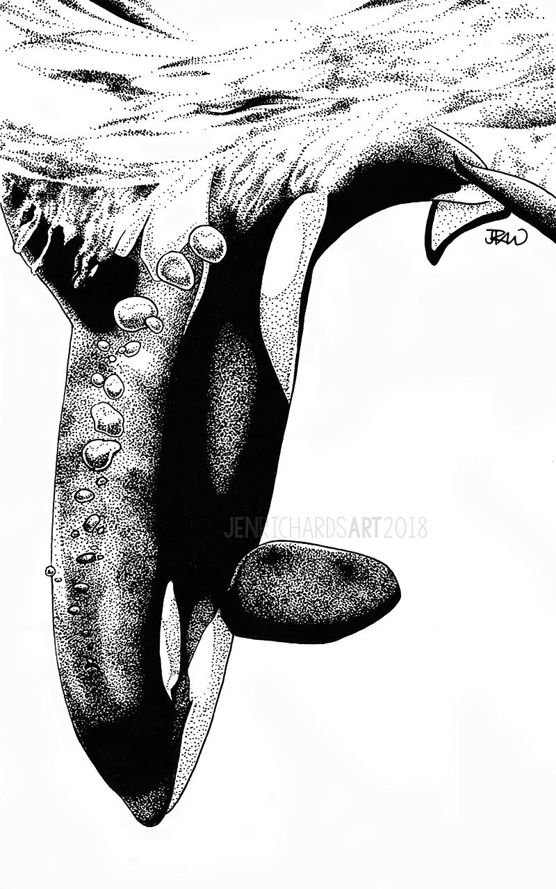 orca-dive.jpg