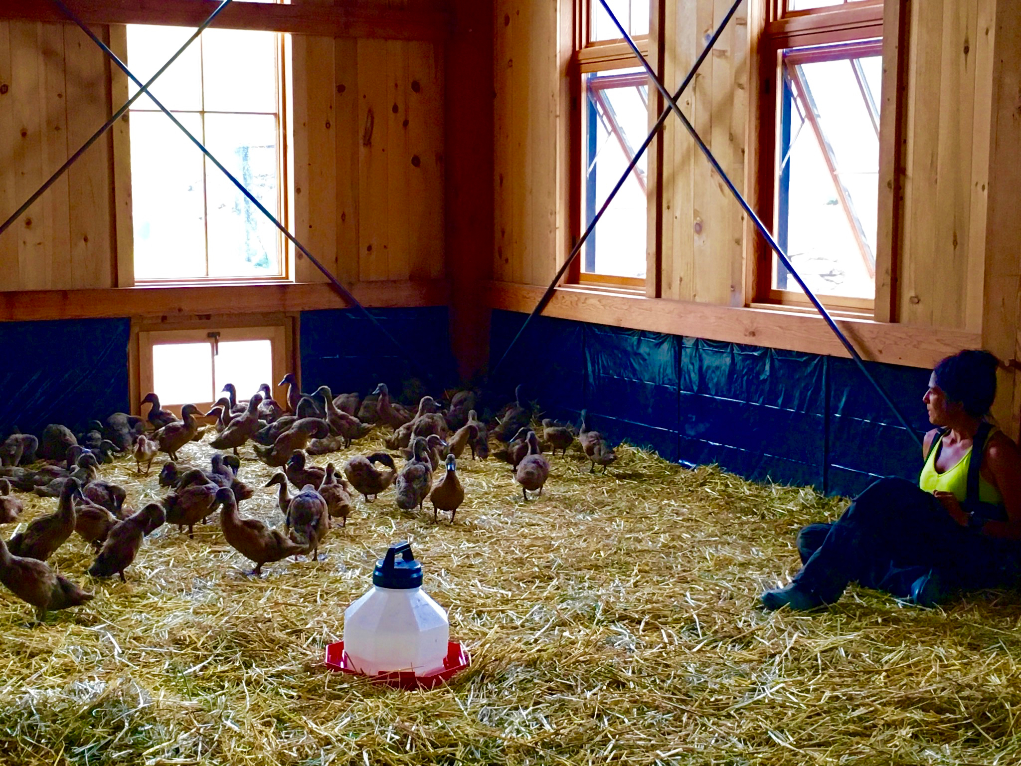Newly-arrived to their new home, in the energy barn with Shawn