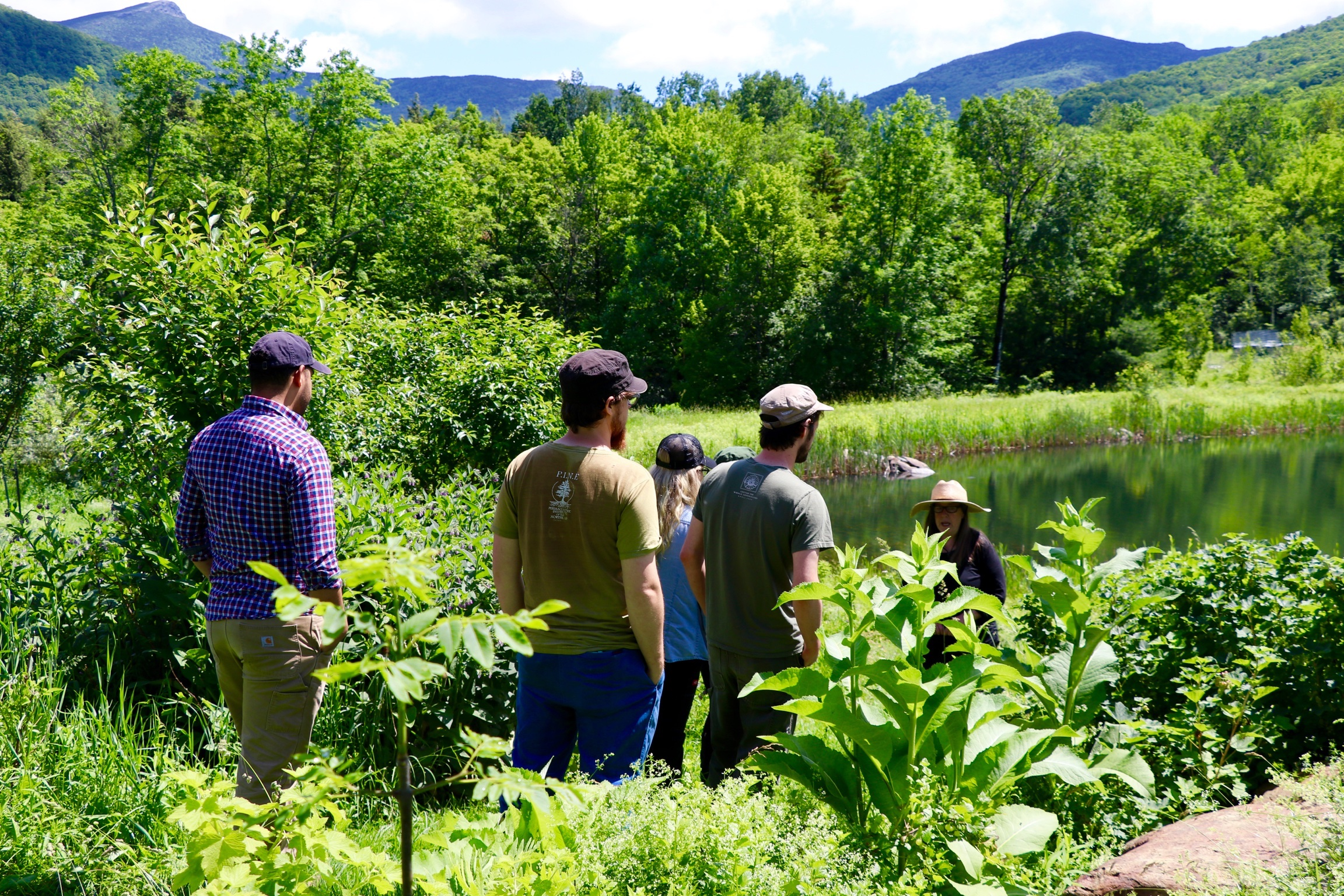- The east gardens in our permaculture system: comfrey, currants, sea bukthorn, elderberry, blueberry, raspberry, pear and apple trees, horseradish, monarda (bee balm), and more.