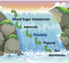 endocrine cascade.PNG