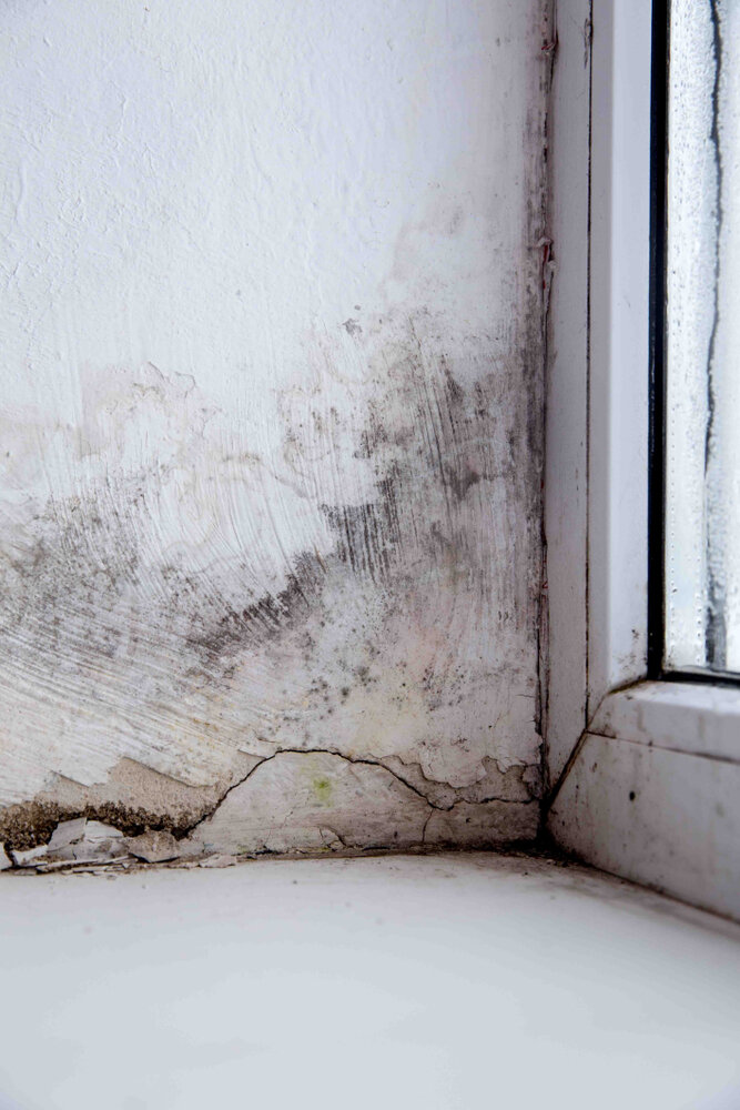 Toxic-Mold-From-Suspicions-to-Solutions.jpg