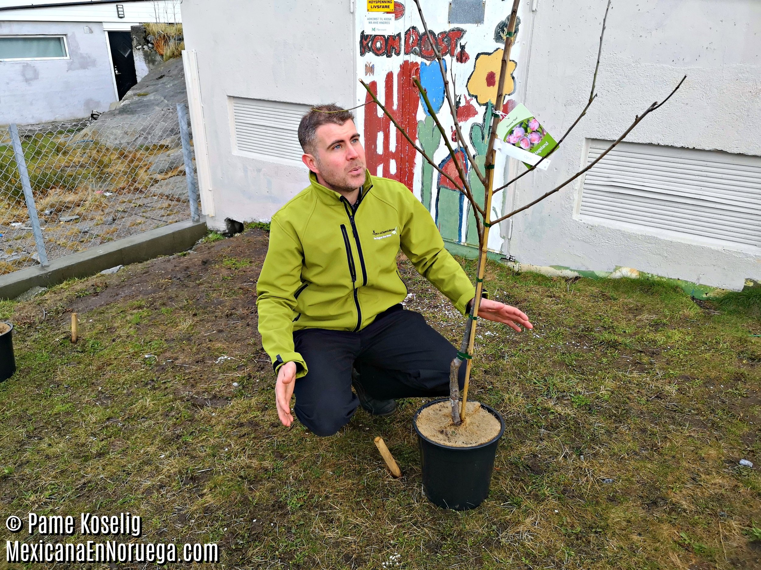 5 - Paule y el árbol _ Pame Koselig _ Mexicana en Noruega.jpg