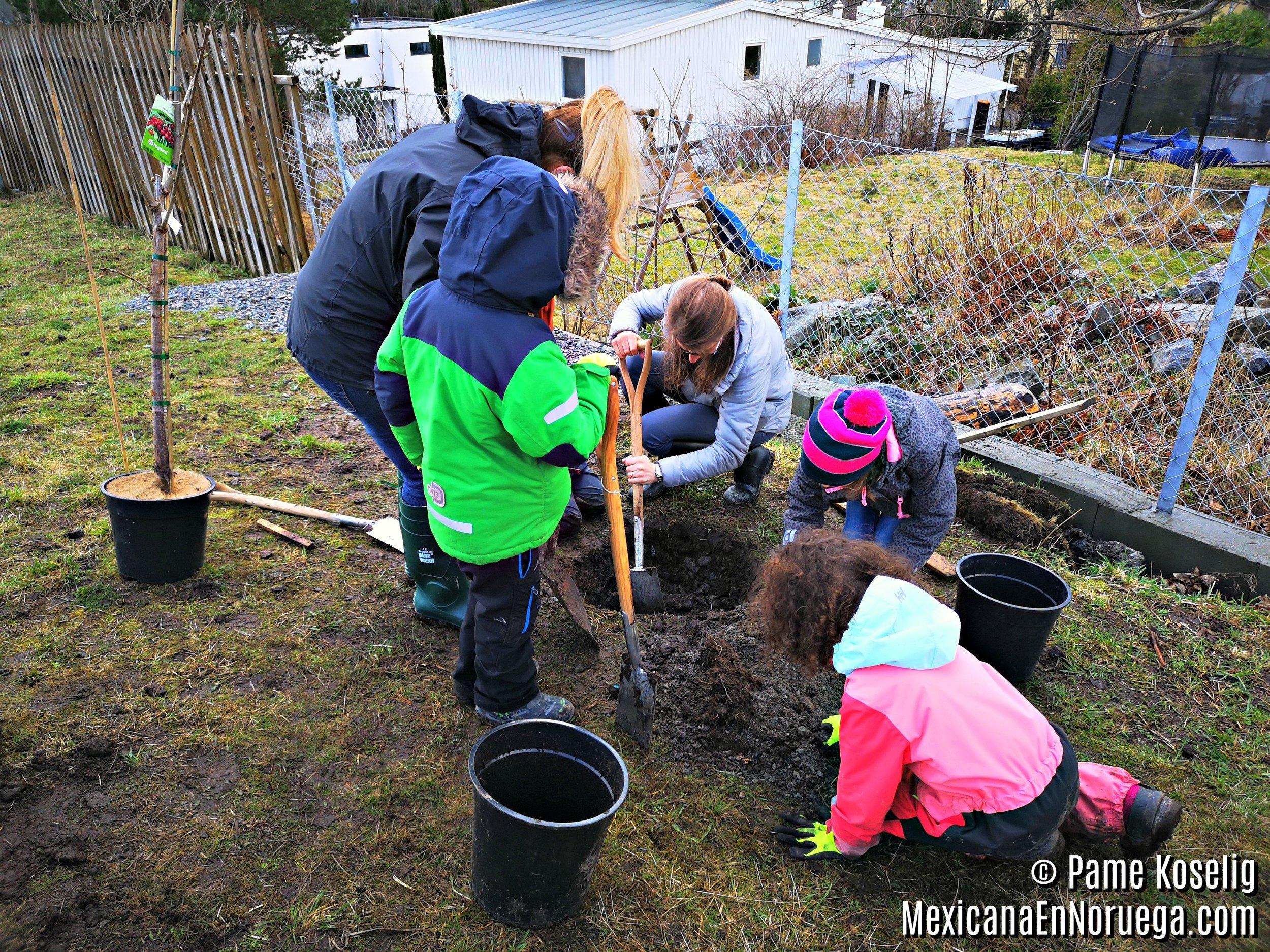 8 - Plantando el árbol _ Pame Koselig _ Mexicana en Noruega.jpg