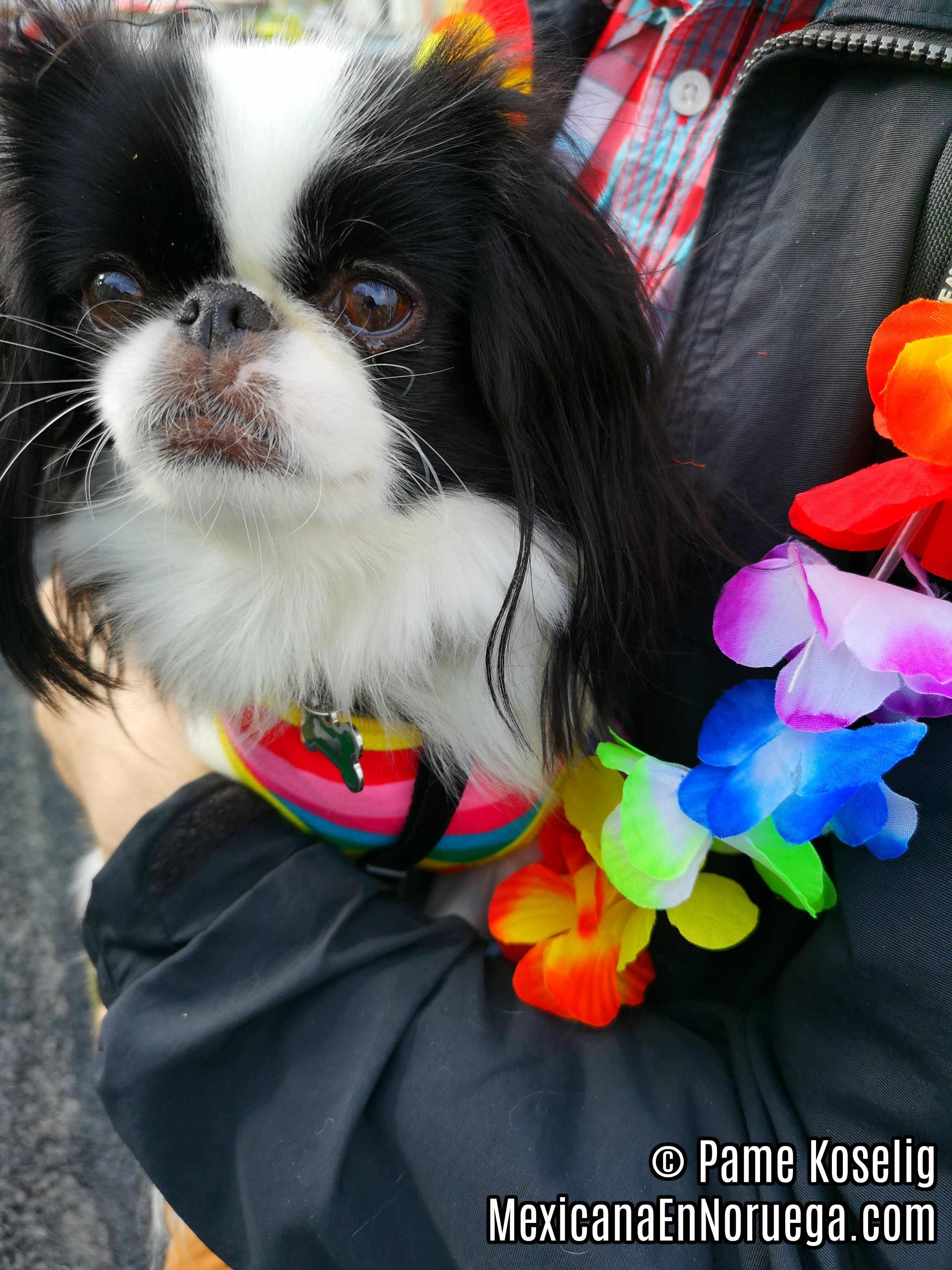 3 _ Pippi at Pride _ Pame Koselig _ Mexicana en Noruega.jpg