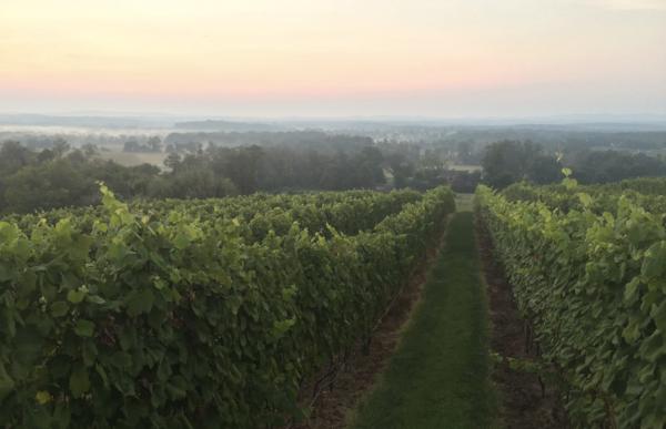 October One Vineyard -