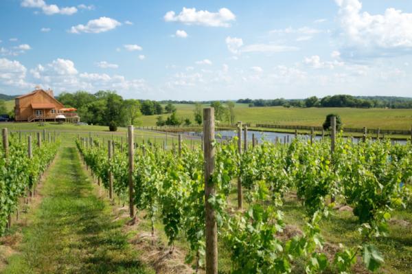 Winery 32 -
