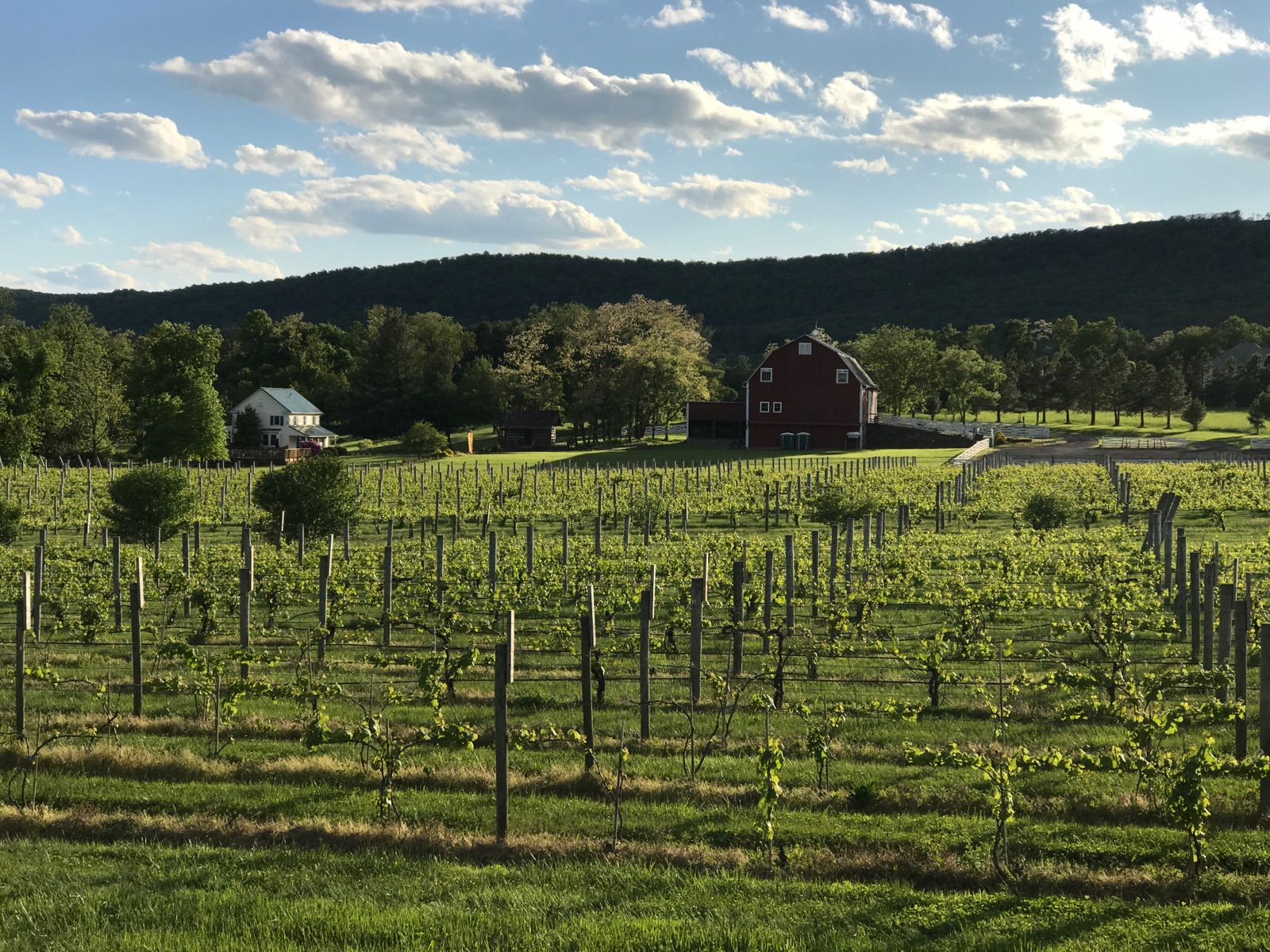 Hiddencroft vineyards -