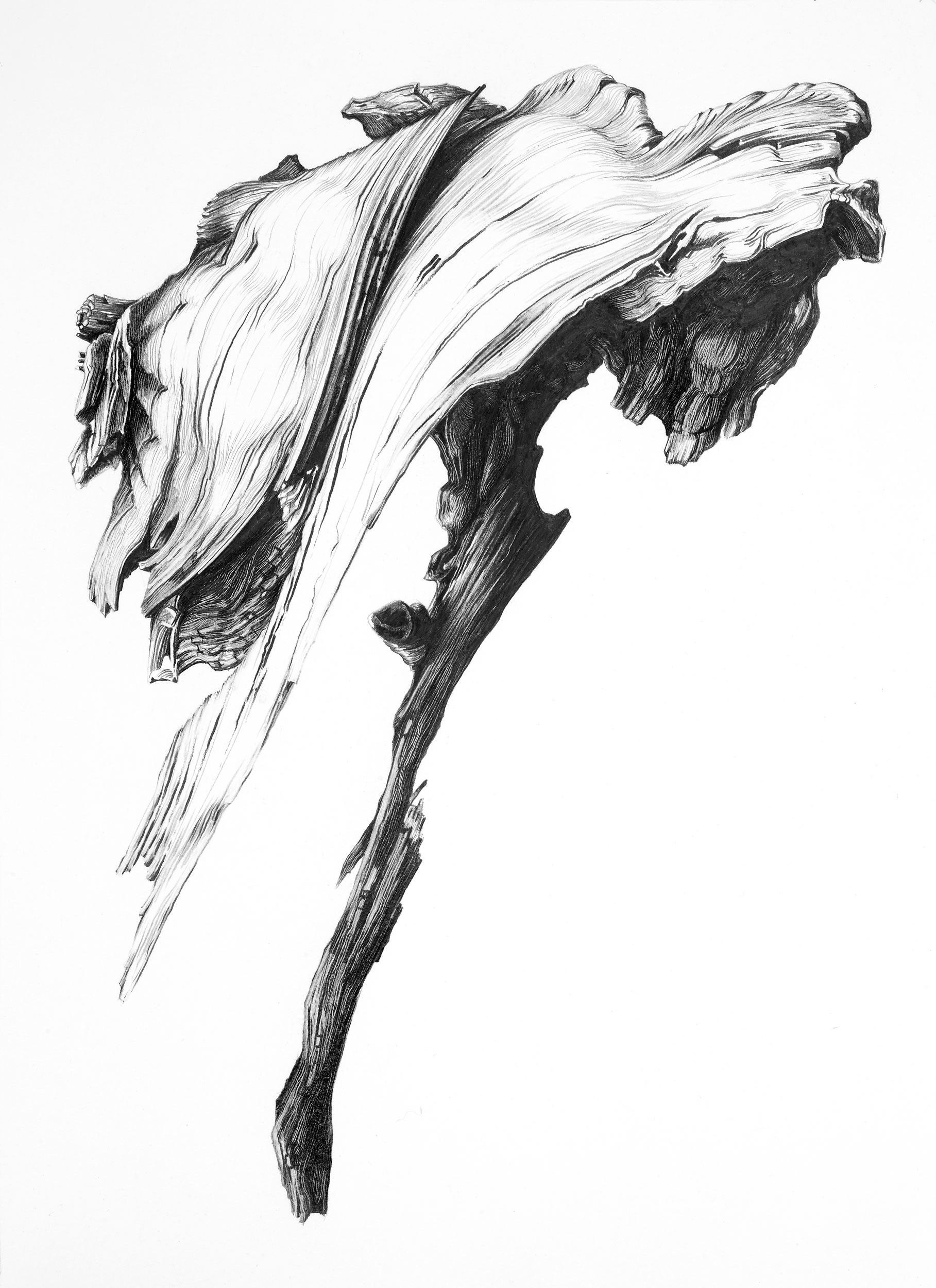 Study: Ghost